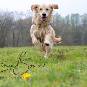Cathy Bowers Photography Offer